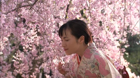 434692136-kimono-flirting-sakura-cherry-tree.jpg